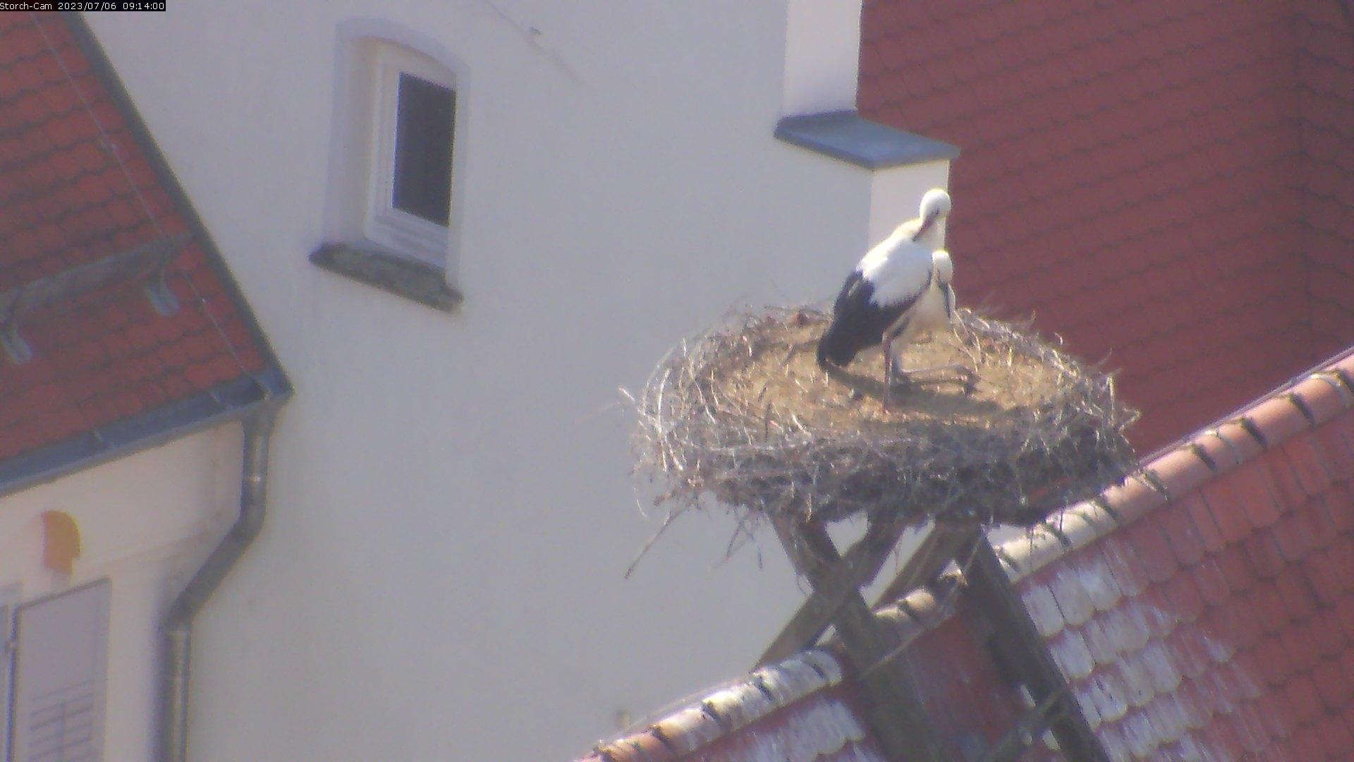 Biberach - Blick auf das Storchennest
